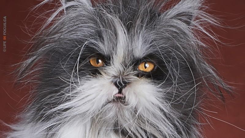 Atchoum the cat close-up