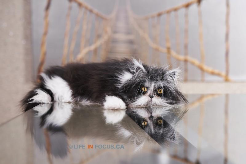 Atchoum the cat cute photo