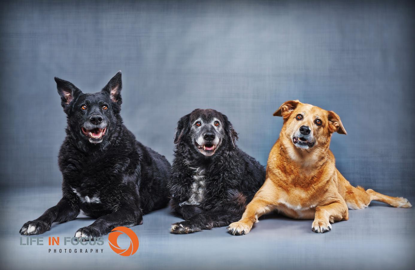 three dog brothers