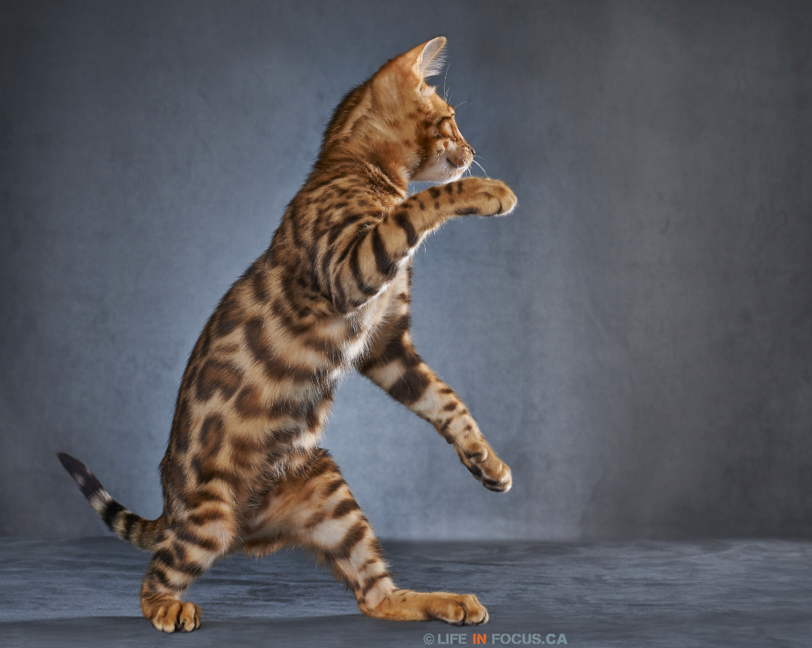 cat blooper 3